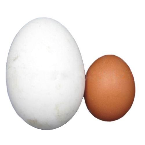 博扬 100%散养生态鹅蛋 枚 孕妇/儿童最佳食品